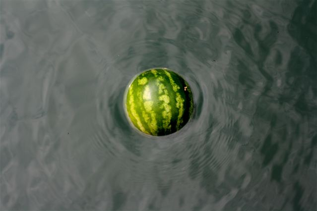 Watermelon-performance-romaric-tisserand-momo-galerie-venice-venezia-venise-biennale-art-architecture-005
